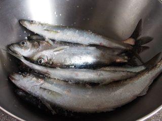 ニシンの大漁祭り ニシンの刺身と握り寿司