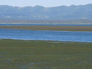 北国の夏 湖と野草