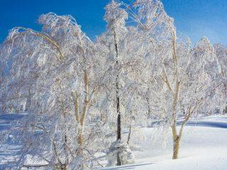スキーに行きたい