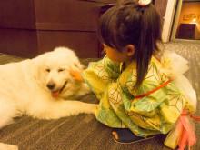 心のリゾート海の別邸ふる川の看板犬 モコちゃん