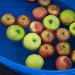 誕生日会のゲーム Apple Bobbing